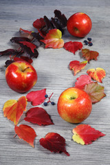 Autumn composition: red apples and colorful leaves