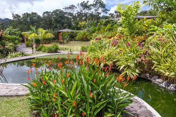 Garden with various tropical plants and flower