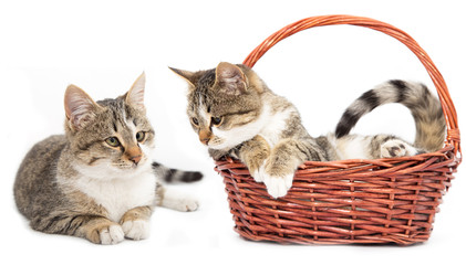 cat in a basket on a white background