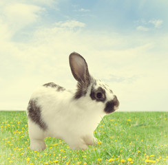 cute rabbit on green grass on blue sky background