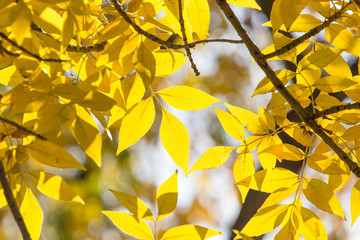 beautiful leaves on the tree in autumn