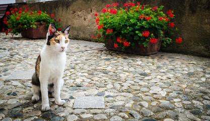 Wild cat on a street