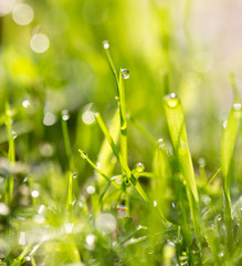 water drops on a green grass
