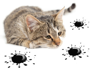 cat and black blots on the white background