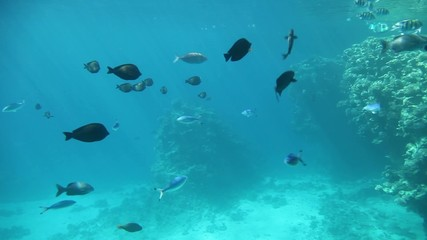 Coral reef and a variety of fish in tropical waters of Egypt