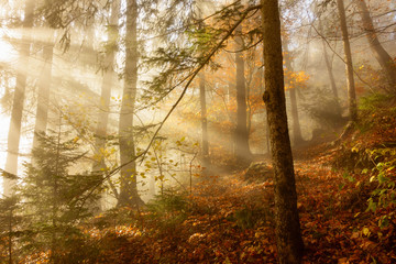 Morgenlicht im herbstlichen Nebelwald