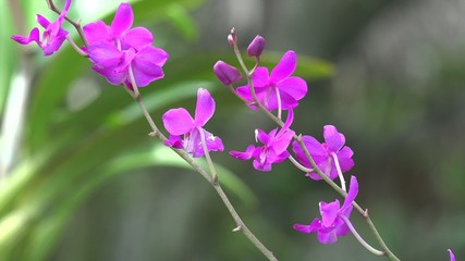 Pink Flowers, Flowering Plants, Nature