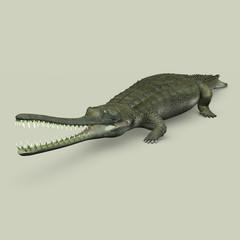 Gavialis gangeticus (Crocodile)