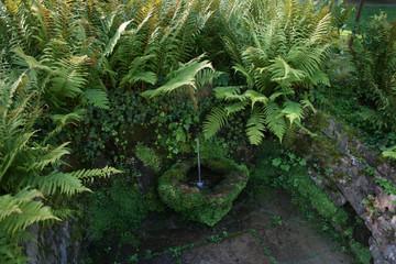 Kleiner Brunnen im Wald