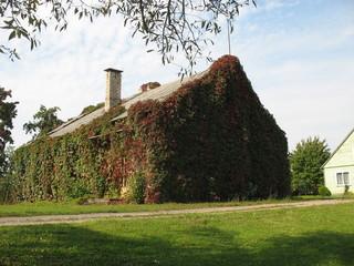 Очаровательный домик в деревне, полностью заросший плющом