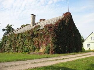 Очеаровательный домик в деревне, заросший плющом