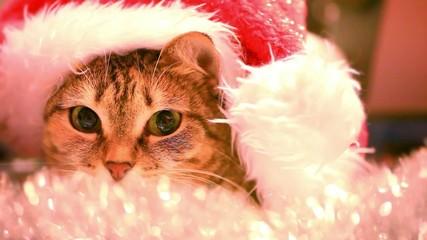 cat as Santa Claus in cap and christmas tinsel. HD. Close up.