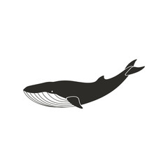 Vector Illustration of a Whale