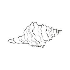 Vector Illustration of a Sea Shell