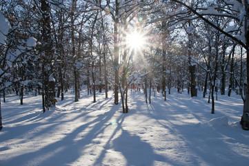 日の当たる林