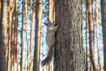 the squirrel on the tree in the forest