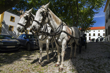 View of a double horse carriage parked on a city.