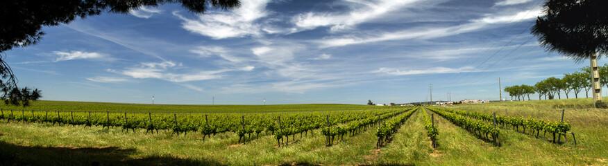 View of vineyard plantation in the Alentejo region