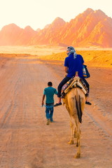 tour camel Egypt