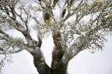 Branch of little tree