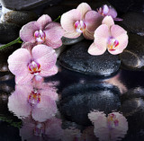 Wet spa pebbles and pink orchids