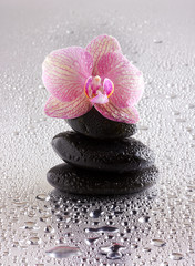 pyramid of black zen stones and orchid on wet background