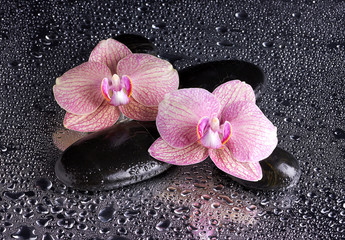 Spa pebbles and pink orchids on wet