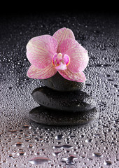 pyramid of black zen stones and pink orchid