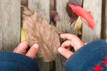 落ち葉で遊ぶ子供の手