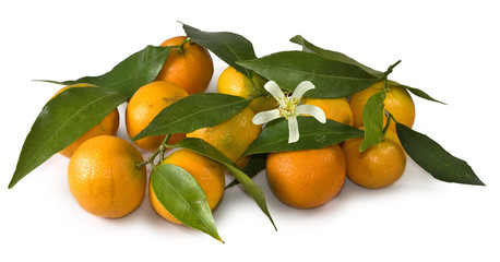 Isolated image of mandarins