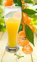 image of juicy and tangerine closeup