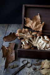 fresh mushrooms on old wooden box on rustic table with scissor