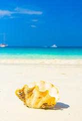 Exotic Shore Seascape Divine