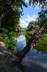 Лес и река