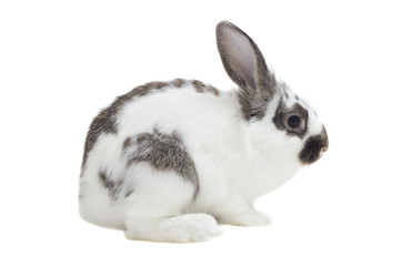bunny sits on a white background isolated, side view
