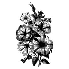 Vintage begonias