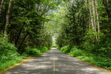 Straight Forest Road