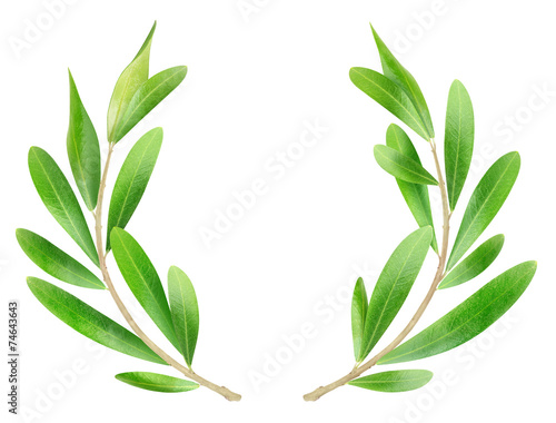 Tuinposter Olijfboom Olive branches isolated on white