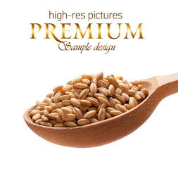 Pearl barley in a wooden spoon  isolated on white background