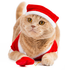 Christmas santa cat carrying gifts in the bag