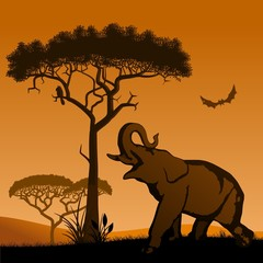 Savannah, the silhouette of the trees and the elephant.