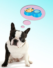 Cute French bulldog and it thought bubbles on light background