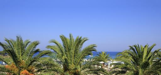 Palm trees on the beach of Aegean Sea.
