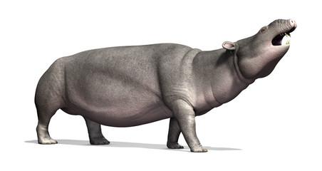 Moeritherium - Prehistoric Mammal