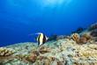 Hawaii Tropical Fish