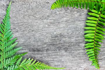Green fern leaf border on wood