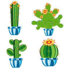 Cactuses in pot