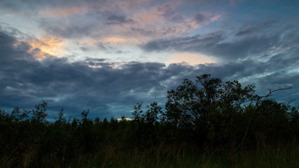 Forest field at dusk