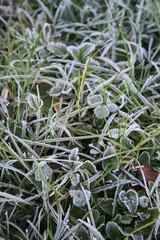 gelo sull'erba_ inverno