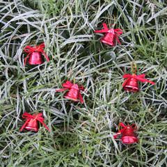 sfondo di Natale_ gelo e campane rosse